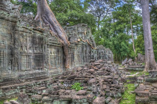Angkor Wat Tree Wall in HDR