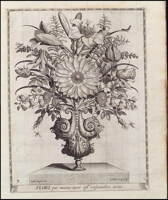Flori par invenis tener est crescentibus annis (de Bry) - Herzog