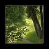 Ein kleines Stück Weg...  (A small piece of road..) (alfred.hausberger) Tags: route grün weg spaziergang abigfave updatecollection ucreleased