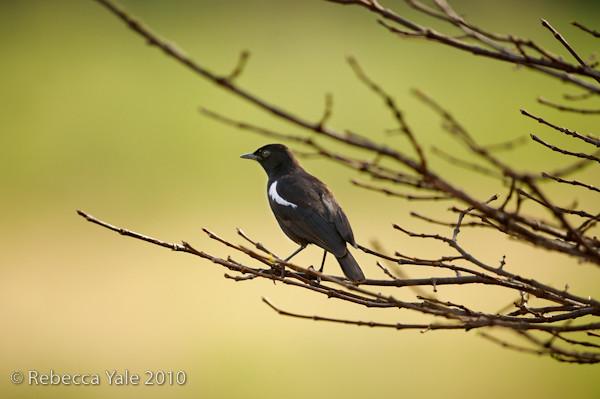 RYALE_Birds_3