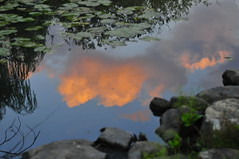 "Lake Mahopac, N.Y. (jkc916) Tags: elitephotography ""nikonflickraward"" colourartaward blueribbonwinner mahopac putnamcountyny nikond300 ""sweetfreedom"" putnamcounty ny nikon newyork mygearandmepremium d300 usa mahopacnewyork putnamcountynewyork mahopacny jordanconfino jordanconfinophotography jkc916 httpwwwelevatedphotoprocom elevatedphotoprocom wwwelevatedphotoprocom"