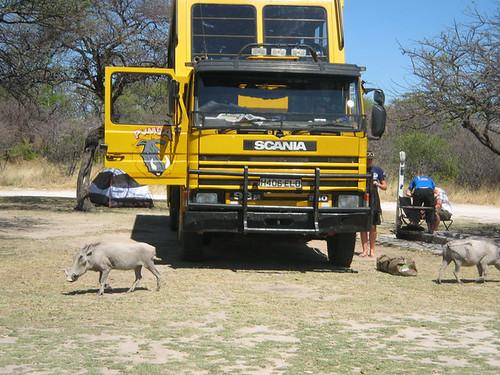 Pumba Truck