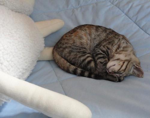 Nina Sobre a cama do pequeno