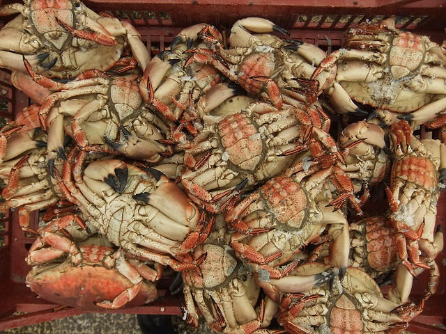 Thumb Muertes Masivas de Animales: Abejas, Pájaros, Peces, y ahora 40.000 Cangrejos