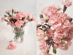 ... (irfan cheema...) Tags: pink flowers texture glass petals spring shanghai blossoms buds carnations irfancheema