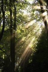 Lichtdurchflutet (blumenbiene) Tags: wood trees leaves sunshine sunrays sonne wald bltter bume sonnenstrahlen sunbeams sonnenschein