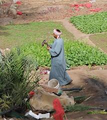 Garden in Aqaba (mark.photos) Tags: garden jordan qaba
