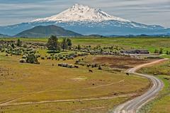 Mt.Shasta Photo