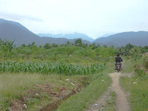 Bukit Lawang - Région (2)