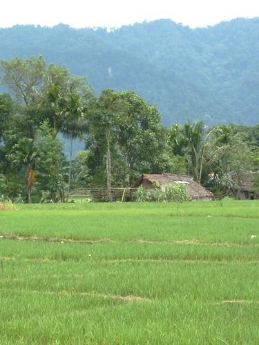 Bukit Lawang - Région (17)