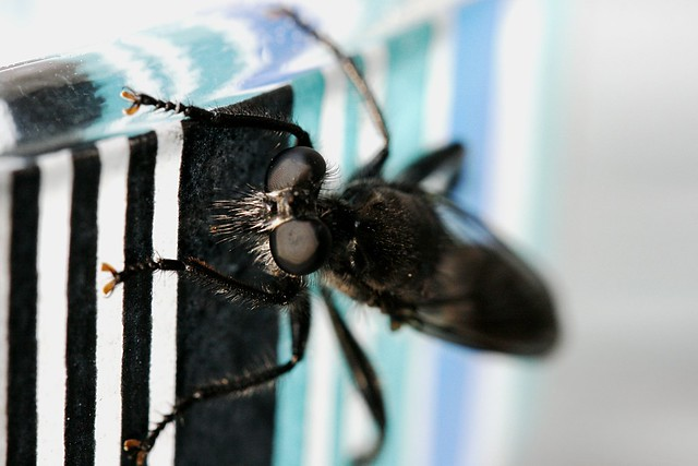 Macro-insekt