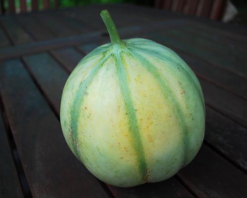 Charantais Melon