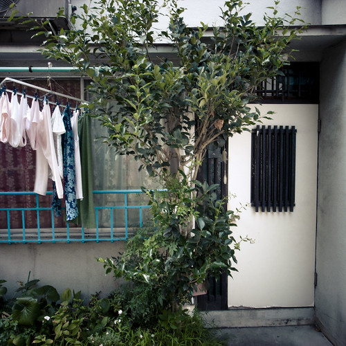 Laundry Tree Shade