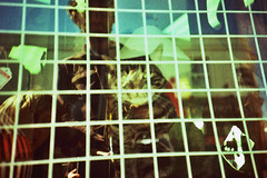 (The New Motive Power) Tags: road street people reflection window shop analog cat grid lomo lca lomography bars crossprocess albert grain lofi slide slidefilm portsmouth southsea
