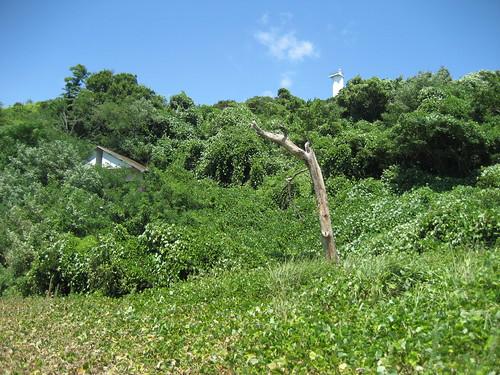 絵の島 広島 写真23