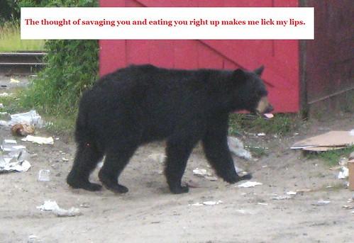 bear chat 7