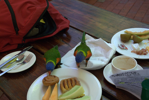 Breakfast with the bird (@ Rainforest Habitat in Port Douglas)