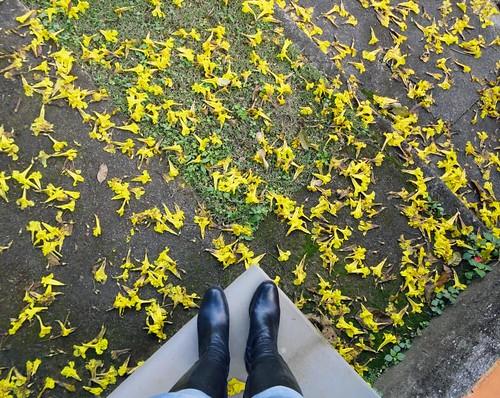 Chão florido