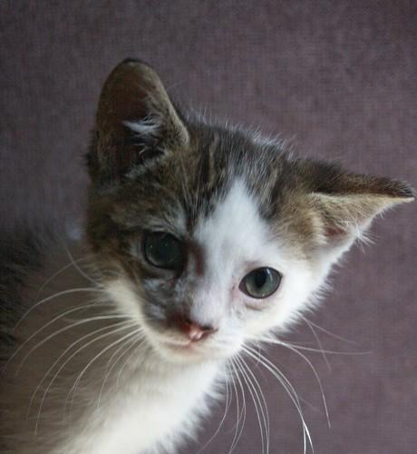 A Kitten named Spot