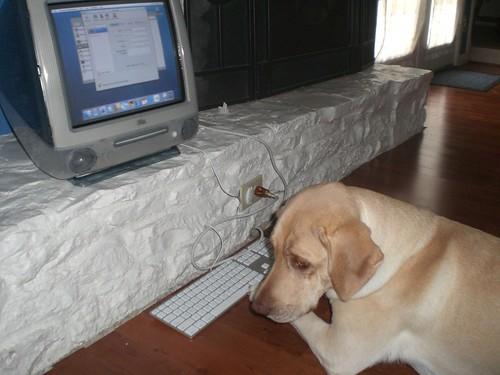 Elanor at the computer