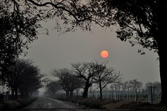 under a red sun sunset (erbecke) Tags: sunset red sun sol argentina rojo cordoba dust morteros