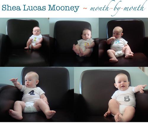 month 5, Shea