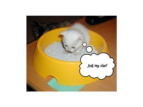 "Kitten in ""sandbox"""