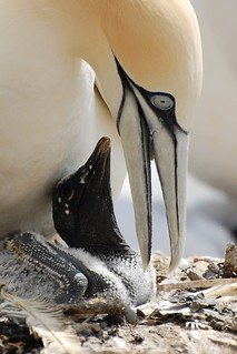 Parent and Baby