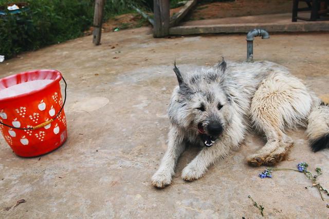 A dog in Longsheng, Guangxi, China