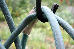 wet gardens 5