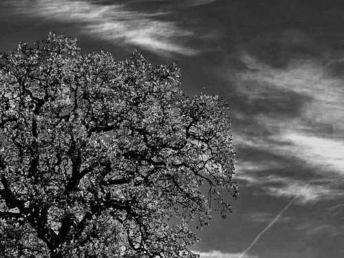 a tree . a sky