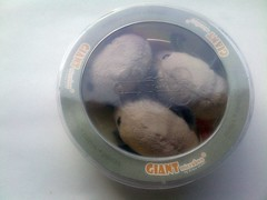 Dust mites from GIANTmicrobes