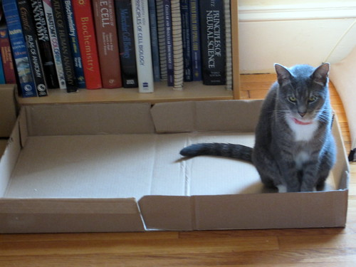 izzy enjoys the j crew box