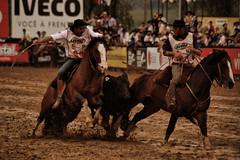 Freio de Ouro 2010 (Ivan Bustam@nte) Tags: brazil horse rio brasil d50 de criollo caballo cheval grande nikon do mare competition 70300mm cavalo pferd stud sul stallion ouro brsil paard gaucho gacho crioulo gauchismo freio equestre bresilien ginete abccc