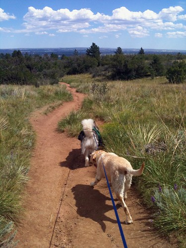 Sadie and Luka lead the way