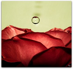 * (Pink Flutterby   OFF) Tags: red flower macro love nature wet water rose canon petals natural sweet drop romance powershot petal explore bloom droplet romantic splash frontpage sx120is sx120