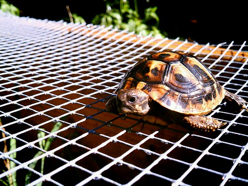 Turtle on the Roof 2