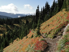 Trail to Tolmie lookout.