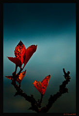 Leafy Bug (AlpineEdge) Tags: blue sky fall leaves leaf branches stick autaum tgamphotodeskmacro