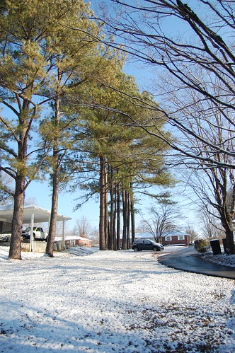 Winter 2011 - driveway / pine trees