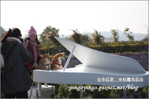 台中后里_中社光觀花市20110130_I6192