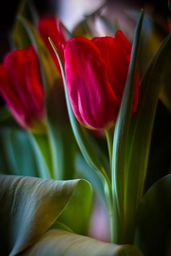flowers-1685.jpg
