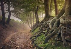 Seekers (Sarah_Brooks) Tags: mist trees roots autumn lanscape somerset fog misty morning