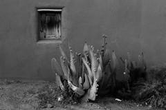 (el zopilote) Tags: 500 corrales newmexico street architecture townscape smalltowns eos 1dsmarkiii canonef50mmf14usm fullframe bw bn nb blancoynegro blackwhite noiretblanc digitalbw bndigital schwarzweiss monochrome