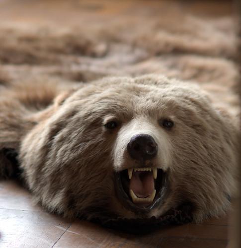 Das Bear