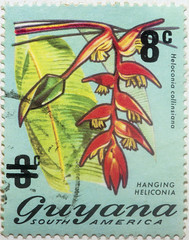 Guyana 3 cents Heloconia 8 cents overprint