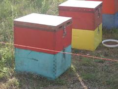 Μελίσσια Βουνό Αμπελοκήπων Καστοριάς 16 5  2010 002