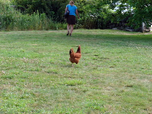 "now that's what I call ""free-range"""