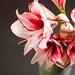 1006 flowers #5