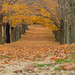 Leaves     fall in Millstone NJ